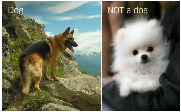 это собака а это не собака